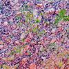 Pure Granite<br /> Zilker Gardens, Austin, TX