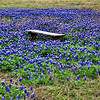 Sitting Bench Amongst the Bluebonnets