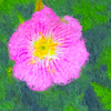 Rock Rose: An Impressionist View