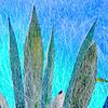 Mirage-A Century Plant Fine Art