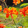 Pride of Barbados II