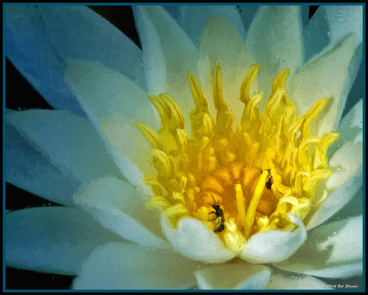 Water Lily Comparison - 2 of 3