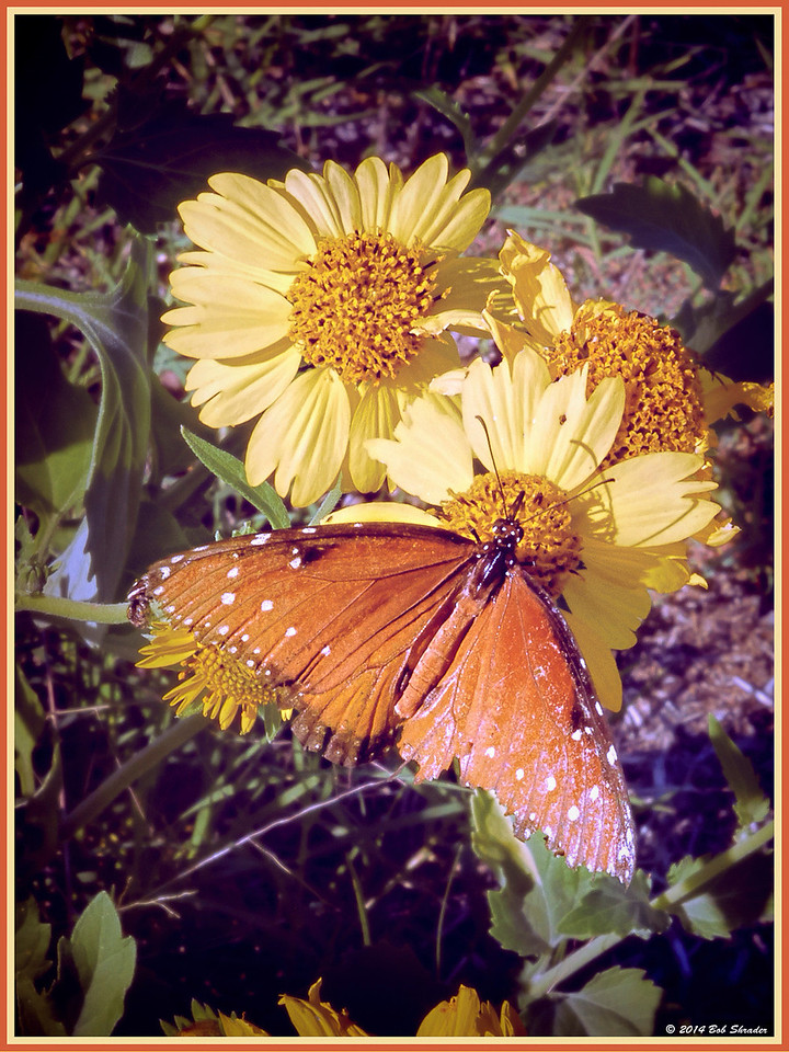 Butterfly on Wildflower