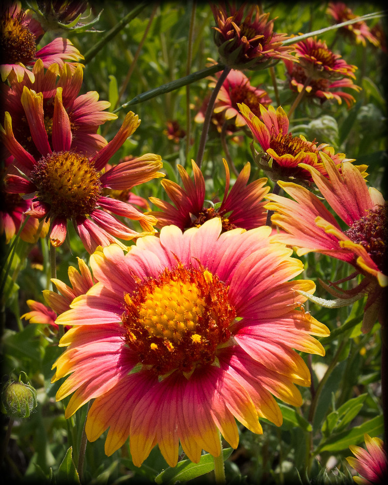 Indian Blanket Composite