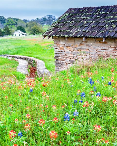 Wildflowers, etc
