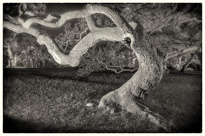 'An Entish Revery' - Treebeard's Lament