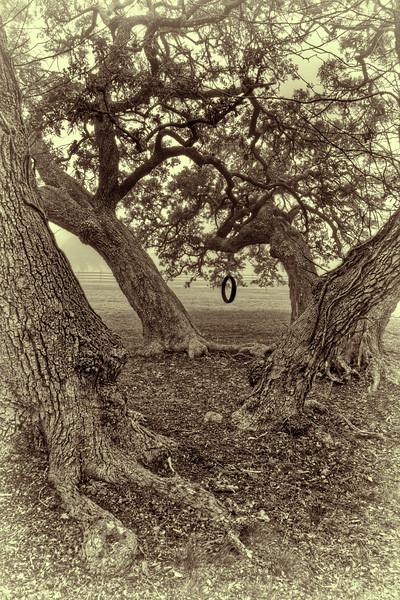 """Treaded Swing"" - HDR - Live Oaks - Old Baylor Park, Independence, TX"