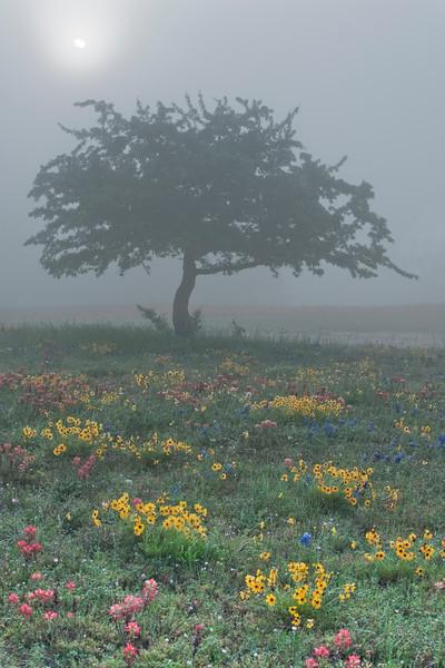 'Good Mornin' Tree'