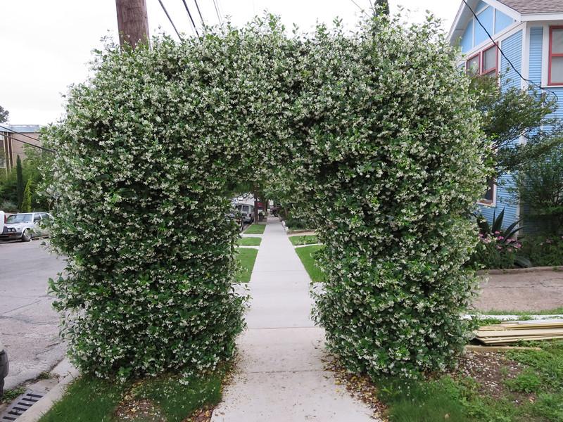 Hedge arch, Austin
