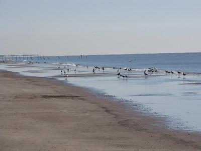 shore birds-a mixed flock