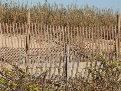 Rows of fencing protect the sand dunes; replacement fences are behind the original fences.