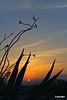 SunrisenearBigBendNP_D704235