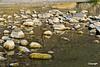 BigBendNP_riverreflections_D703933