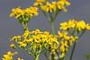 Wildflowers_D735122