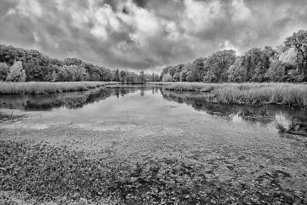 Creekfield Lake_MG_7723