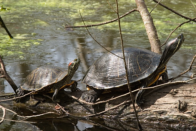 Turtles - Hey mom, not so fast!!!