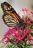 Monarch3_D7K5103