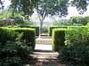 Arboretum trees - 3