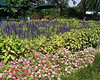 Arboretum flowers - 1