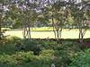 Arboretum trees - 6