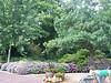 Arboretum trees - 4