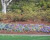 Arboretum flowers - 3