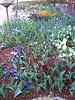 Arboretum flowers - 4