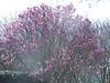 Arboretum trees - 5