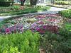 Arboretum Flowers - 2