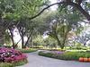 Arboretum trees - 7