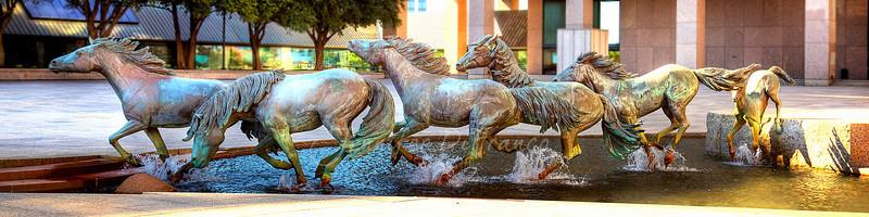 Mustangs at Las Colinas