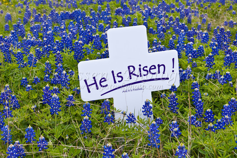 """A """"He is Risen"""" sign with Texas bluebonnets in a field near Ennis, Texas, USA."""