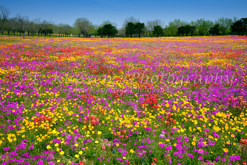 Hill country texas topstockphoto a field of multi colored spring flowers near new berlin texas usa mightylinksfo