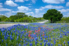 Large display of roadside bluebonnets in hill country near Mason, Texas, USA.