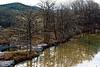 Bald Cypress Frio River
