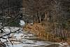 Deer Crossing Frio River