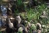 Cypress Knobs