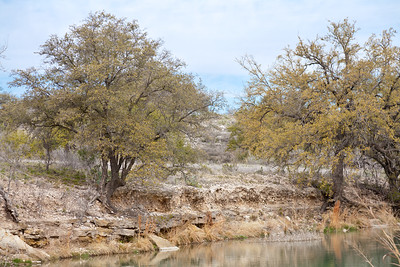 The Kickapoo benefited from the well-placed camp, located on a tall bank covered with light timber and protected by natural brier thickets common to the Cross Timbers area.