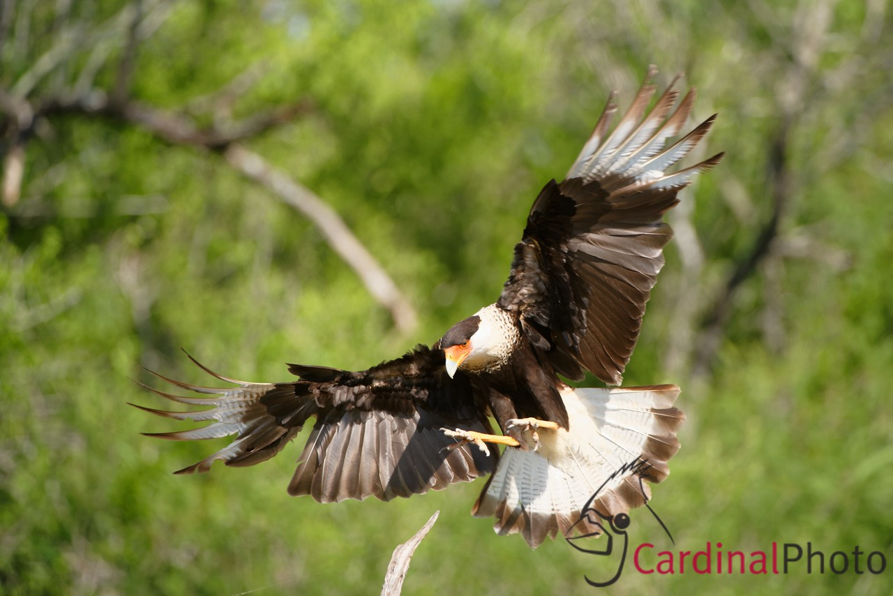 Rio Grande Valley Bird Photo Workshop -- by David Cardinal