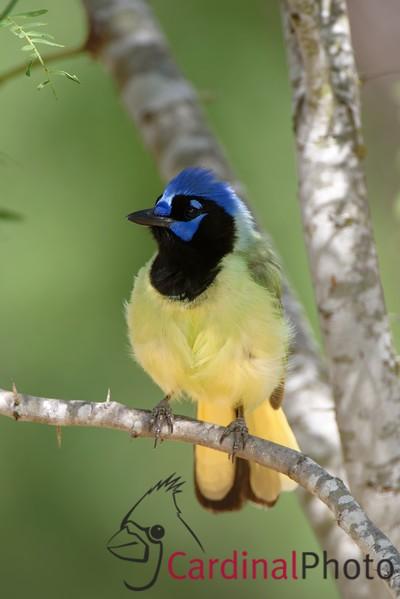 Rio Grande Valley Bird Photo Workshop -- by David Cardinal