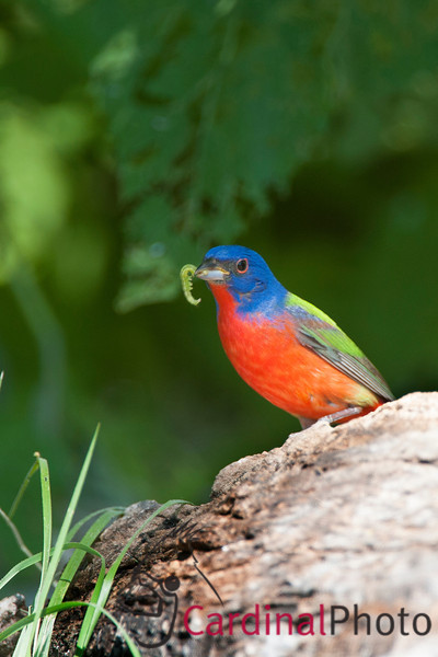 Hill Country Texas Bird Photo Workshop