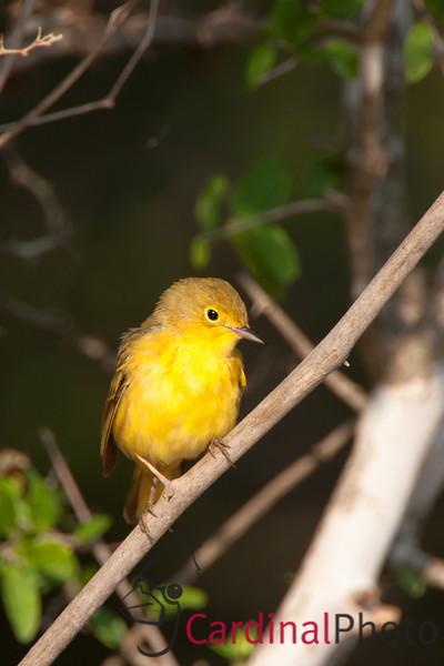 Rio Grande Valley Texas Bird Photo Workshop Wildseed Farms