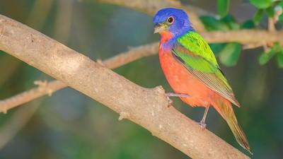 Texas Bird Photo Safaris 2012