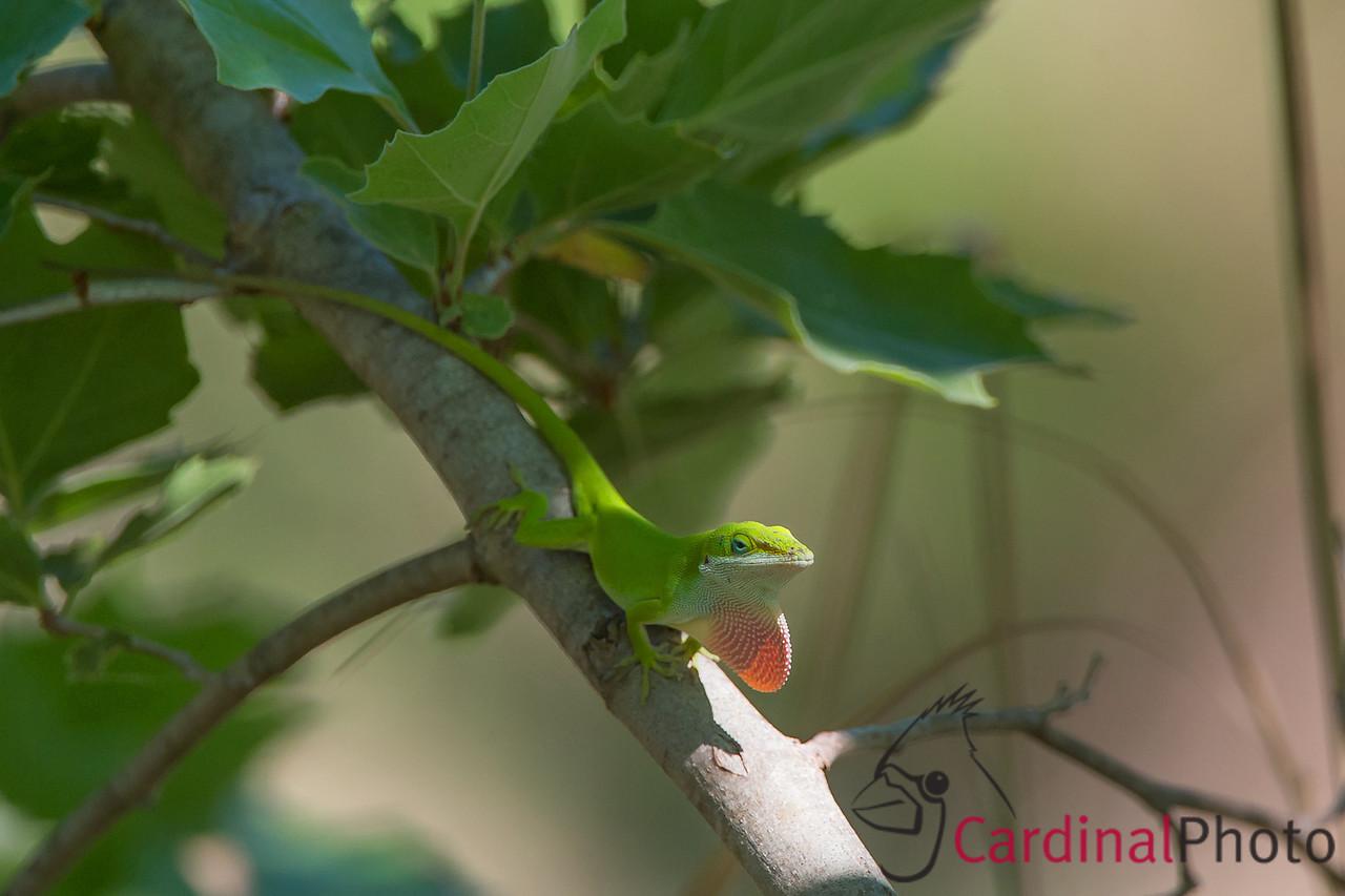 Hill Country Bird Photo Safari -- Photos by David Cardinal