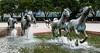 The Mustangs of Las Colinas