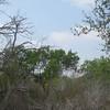 Bentsen - Rio Grande State Park, Mission, Texas