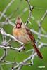 CardinalF_D722029
