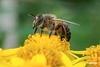 Bee_D729947