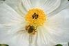 Bee_D718442