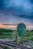 Sunset_D72284567_HDRF